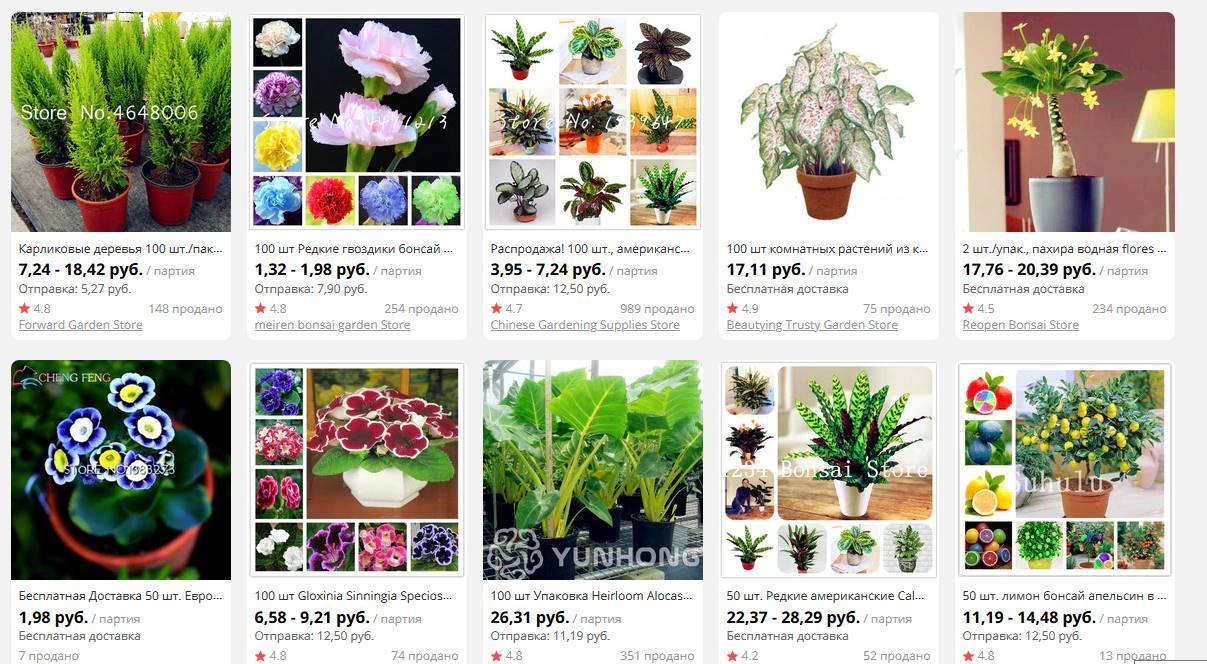 Растения нельзя заказывать на Алиэкспресс